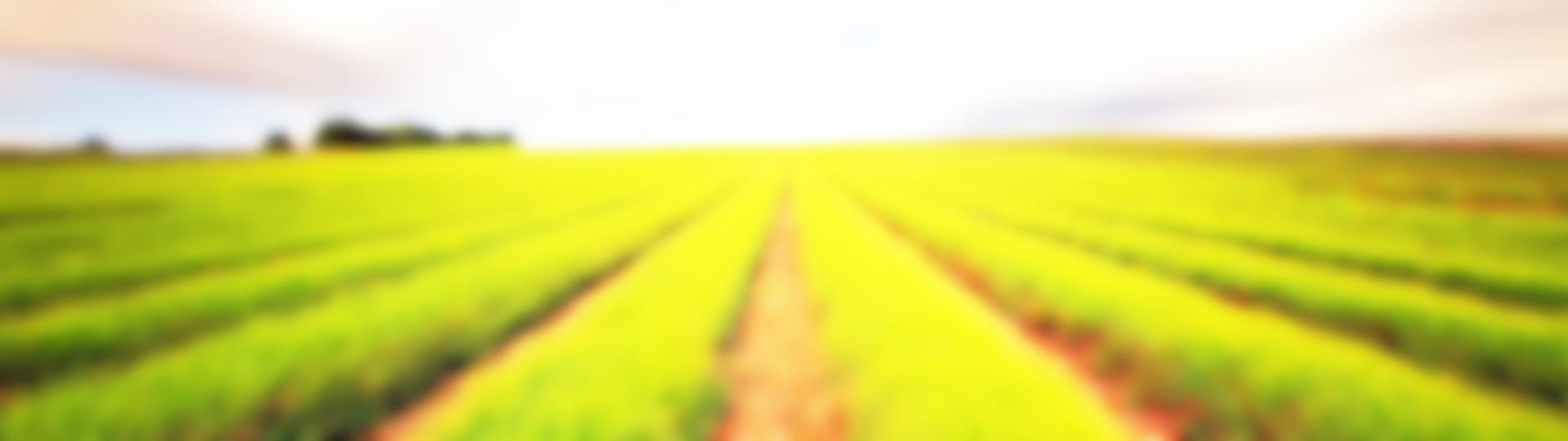 1118613-1920x1080-Field-Landscape1